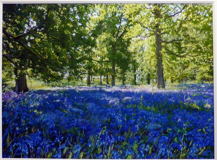 Spring Woodland - Image 0