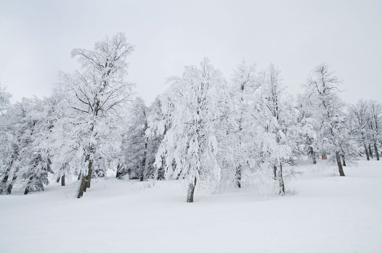 Snow | II (Limited Edition of 20 | Small) - Image 0