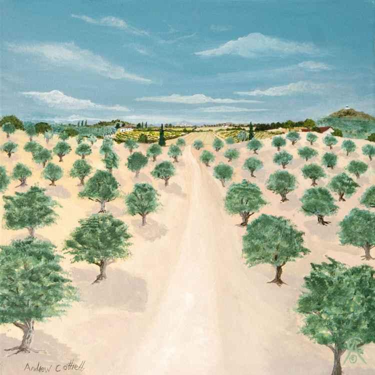 Olive Groves -