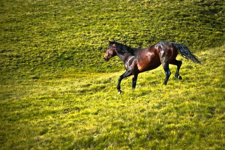 The wild stallion - Image 0