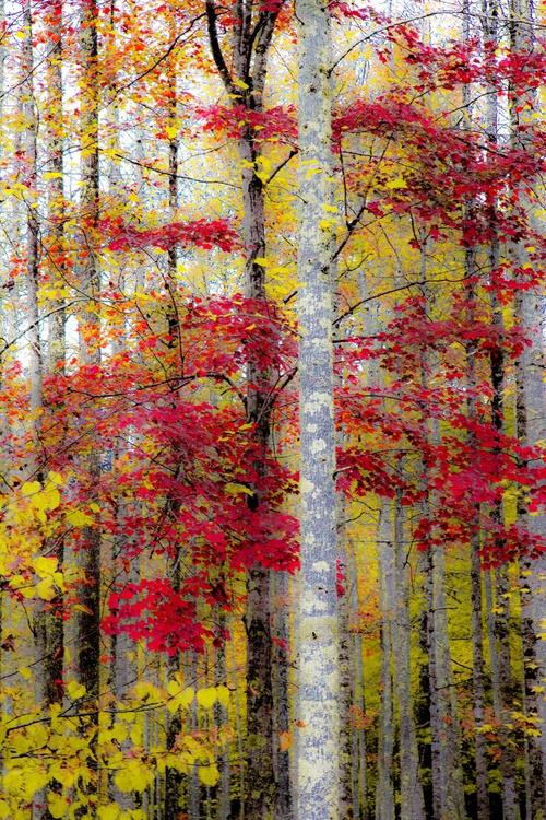 Autumn Impression 2 - Image 0