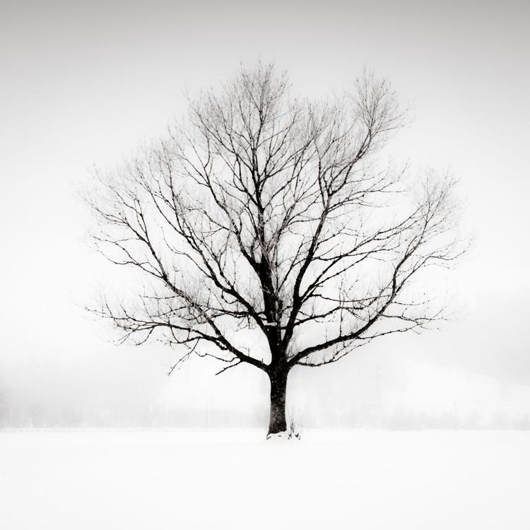 Solitude in White - Image 0