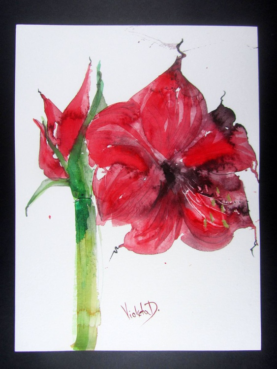 Red Amaryllis (Hippeastrum species) 5 - Image 0