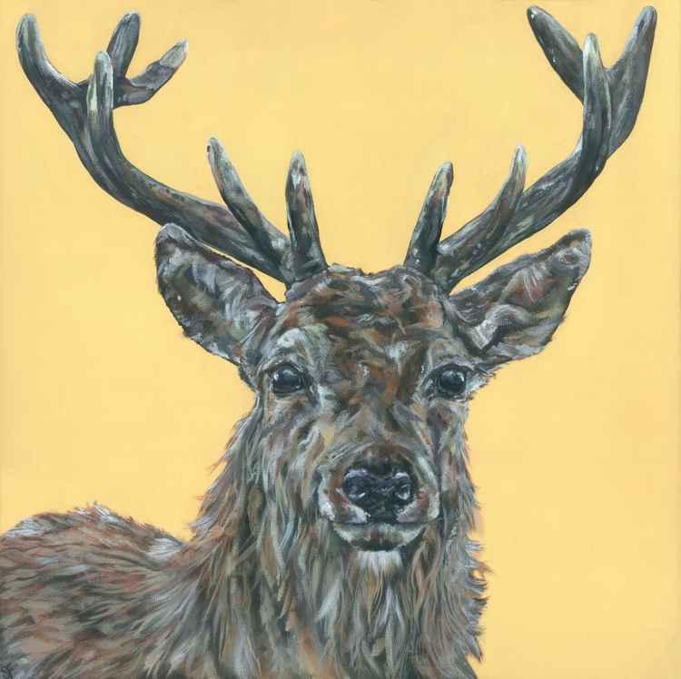 Hello Deer -