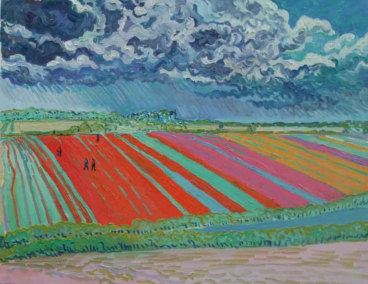 Tulip fields under rain clouds -