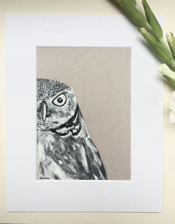 Little Owl Portrait - Image 0