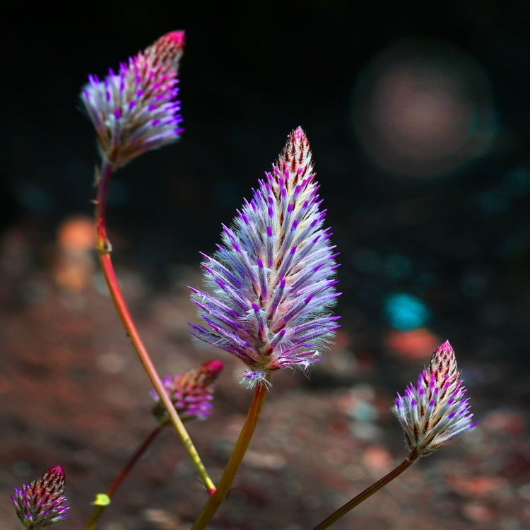 Floral Composition - Image 0