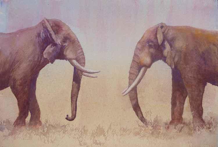 Elephant Dance I - Standoff