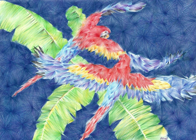 Red Macaws - Image 0