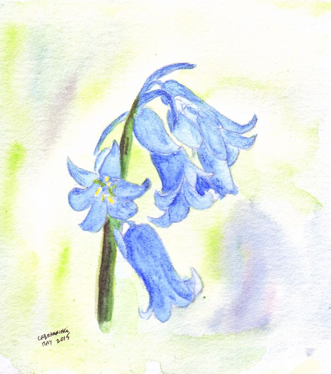 Bluebell - Image 0