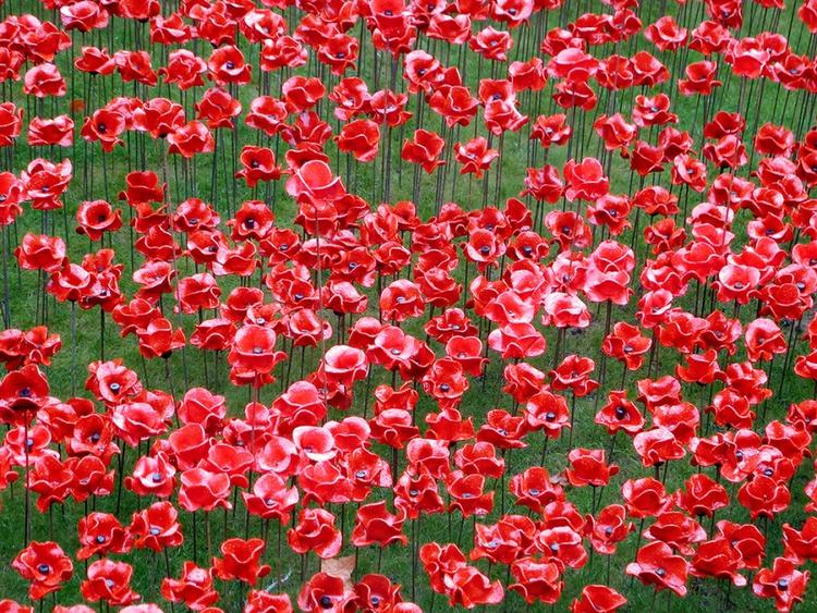 """POPPY FIELD  2014 (LIMITED EDITION 1/200) 12"""" X 8"""" - Image 0"""
