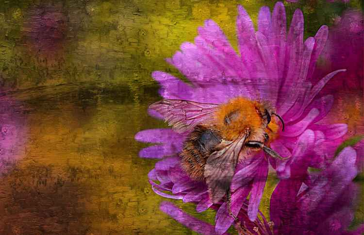 Painted Bee 1 (Canvas)