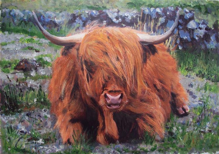 Highland Cattle Grazing - Image 0
