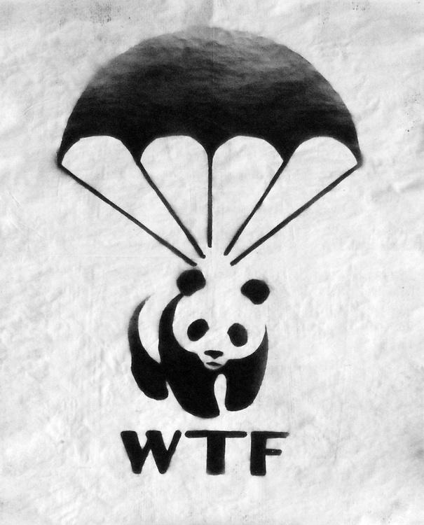 WTF (on Plain Paper) - Image 0