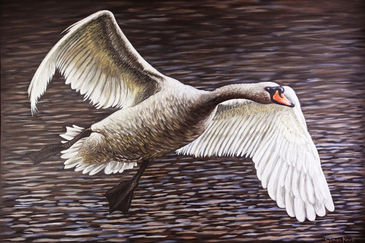 River Severn Swan Gliding - Image 0