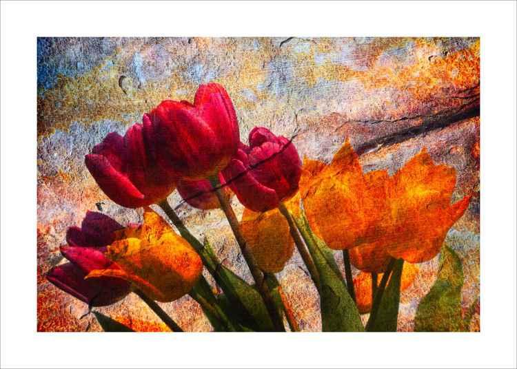 Stone Tulips -