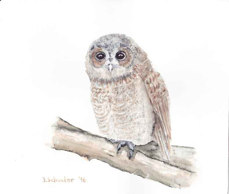 Watercolour birds portraits series. Owl