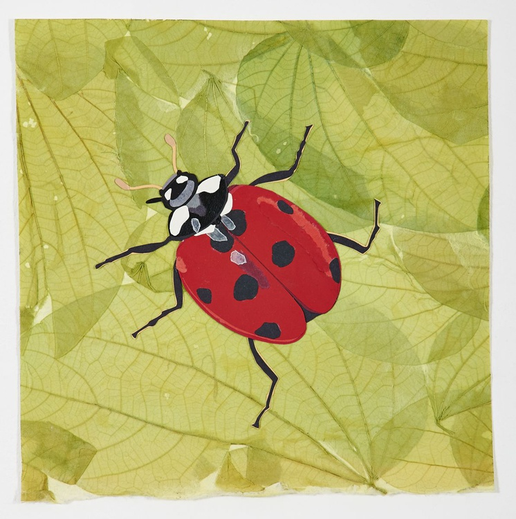 Red Lady Bug - Image 0