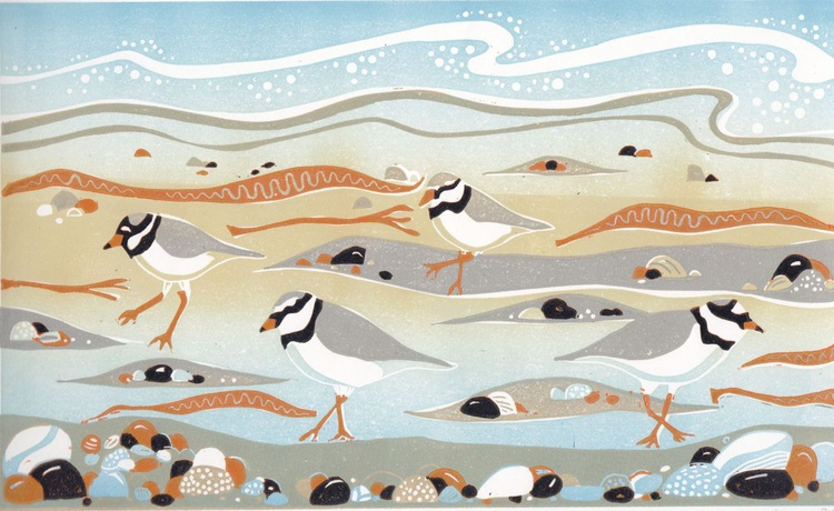 Ringed Plovers at New England Bay - Image 0