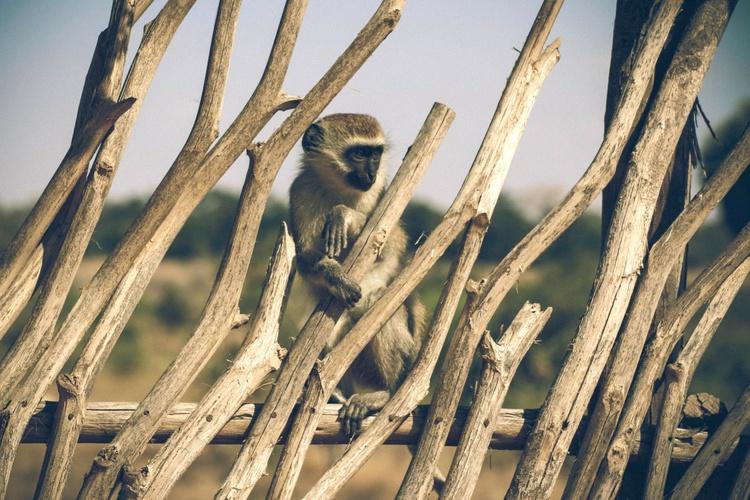 Monkey Island - Image 0