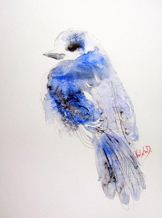 Blue Jay - Image 0