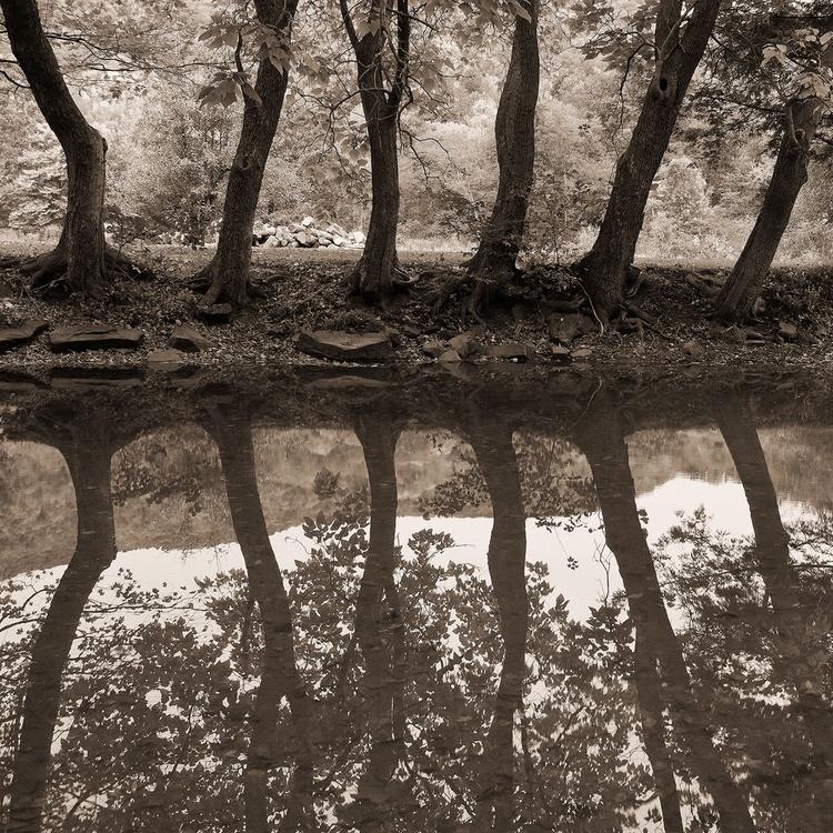 Catalpa Reflections - Image 0