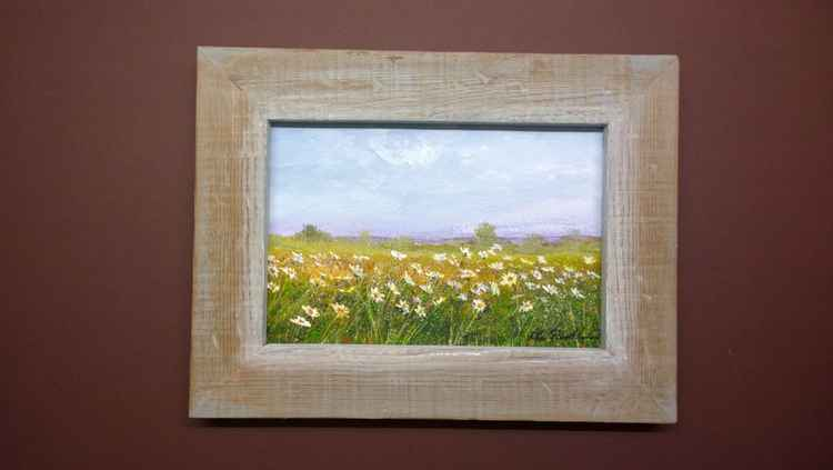 """DAISIES ON ROMNEY MARSH"" -"
