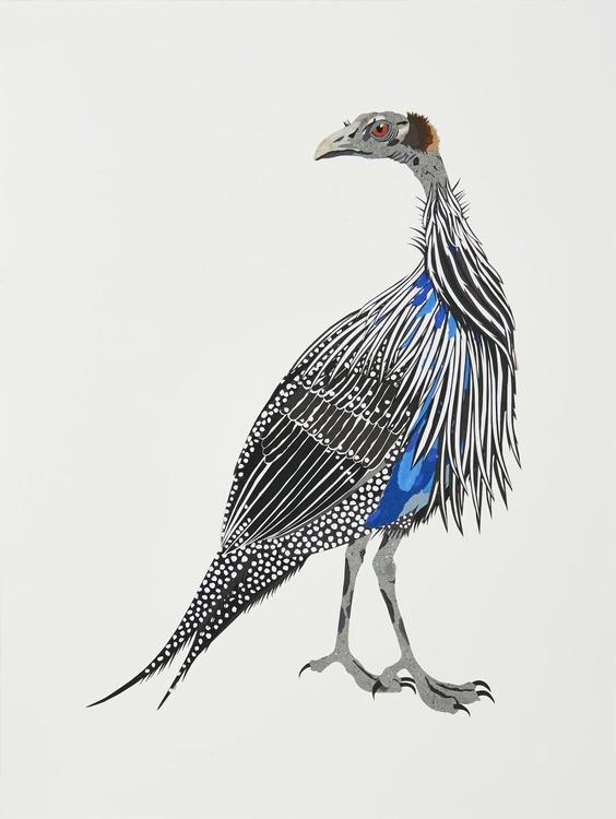 Vulturine Guinea Fowl - Image 0