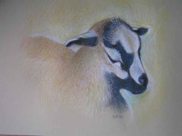 Pygmy Goat -