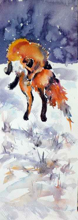 Hunting red fox -