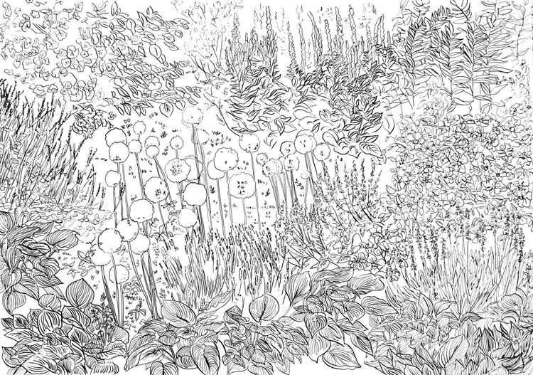 Hosta Garden -