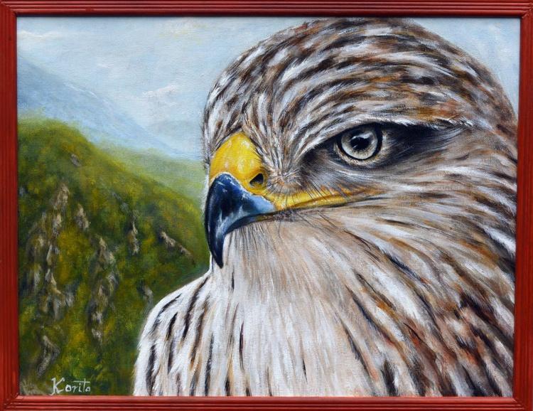 Falcon - Image 0