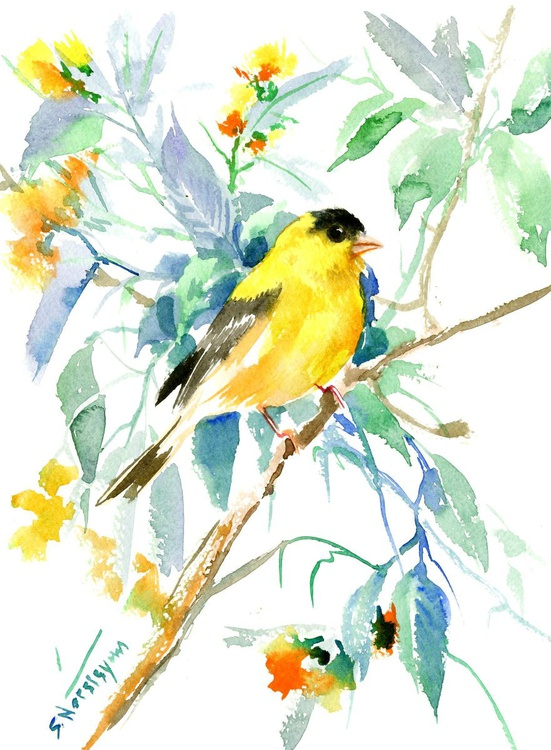 American Goldfinch - Image 0
