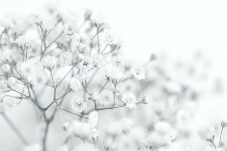 White Tenderness IX - Image 0