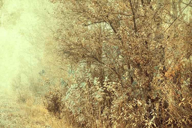 Bohemian Autumn (LTD edition of only 25 fine art giclee prints from an original photograph)