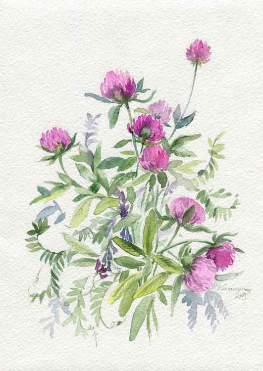 "Original watercolor ""Clover and vetch"""