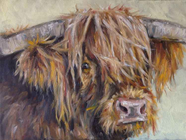 Hairy Cow -
