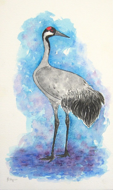 The common crane (Grus grus) - Image 0