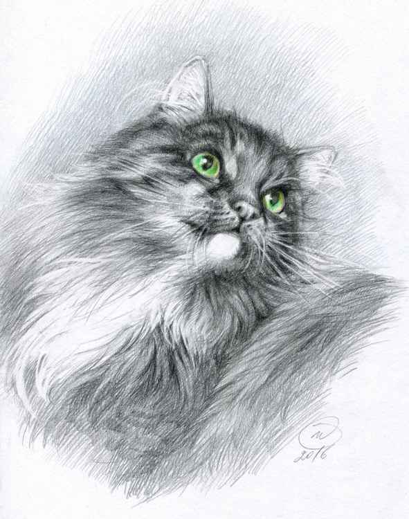 Greeneyed cat -