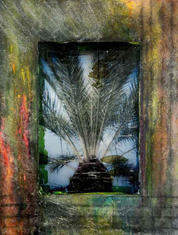 Palm -