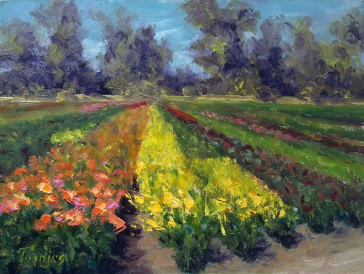 Lilies Van der Salm Farms - Image 0