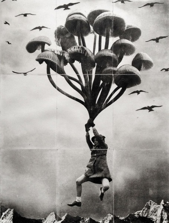 The Girl and The Mushrooms - Image 0