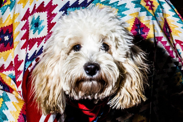 Funny dog - Image 0