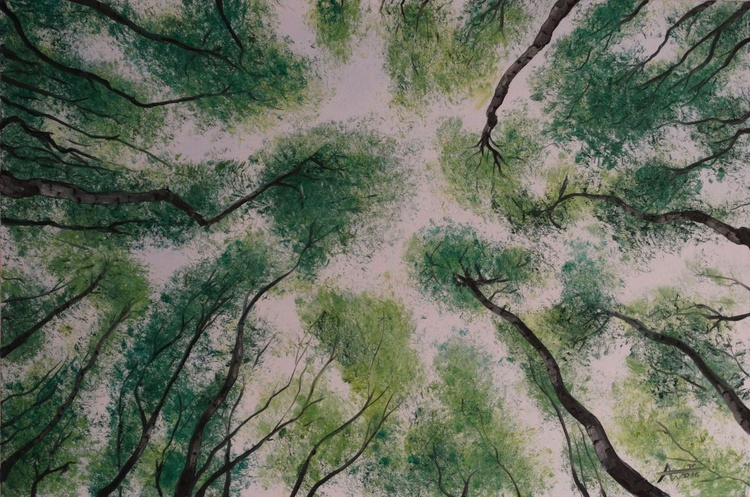 The Beech Forest - Image 0