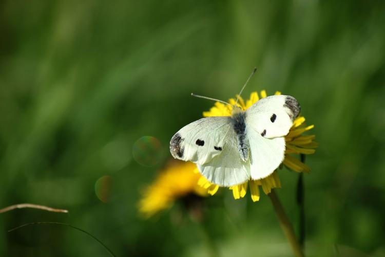 Butterfly on the autumn sun - Image 0