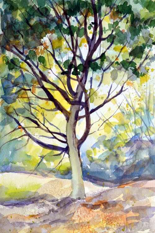Summer tree. -