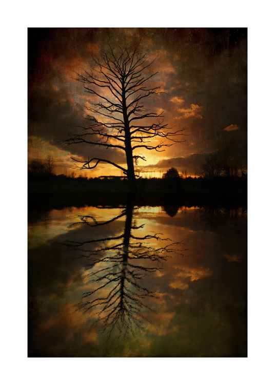 Sunset Tree & Reflections