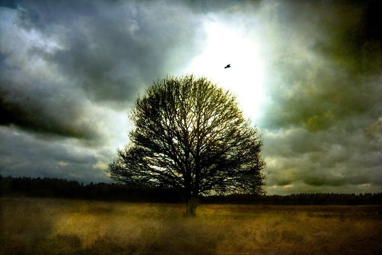 Solitude - Image 0
