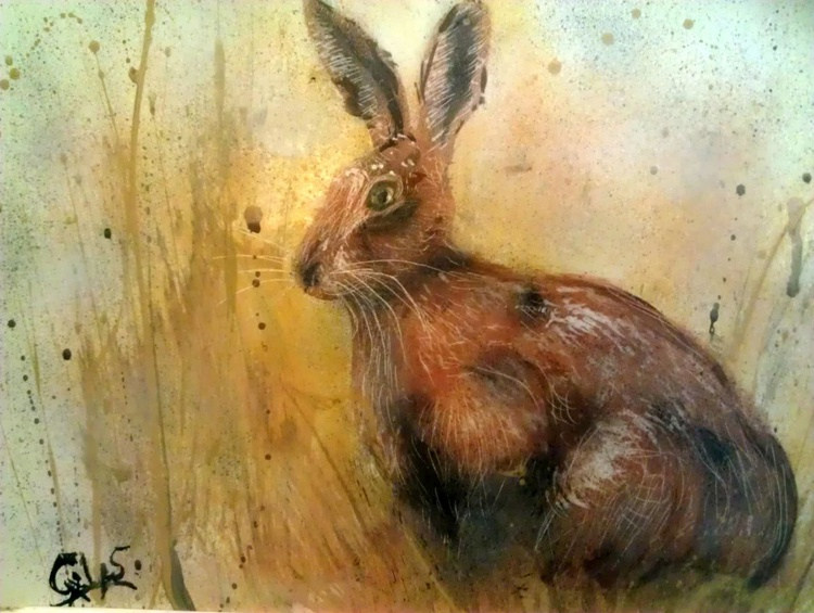 Hare today , gone tomorrow ! - Image 0