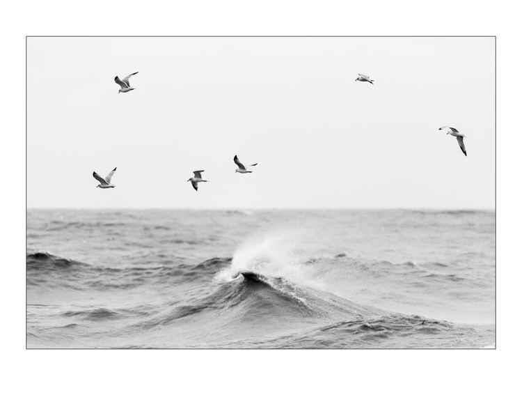 Gulls & Waves -
